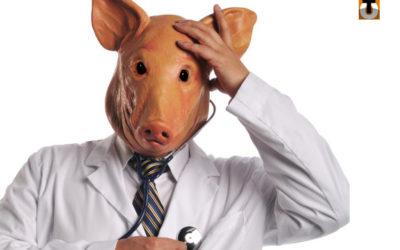 Question à Koen Geens sur l'affaire de la peste porcine africaine