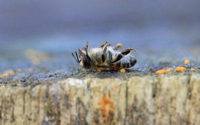 Question à Ducarme sur l'évaluation des risques liés aux pesticides pour les abeilles